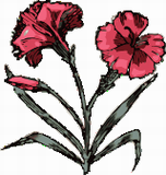 Karafiát