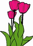 R��ov� tulip�ny