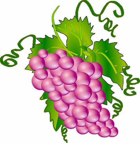 Vektorovy Obrazek Klipart Hroznove Vino Ovoce Zdarma Ke Stazeni